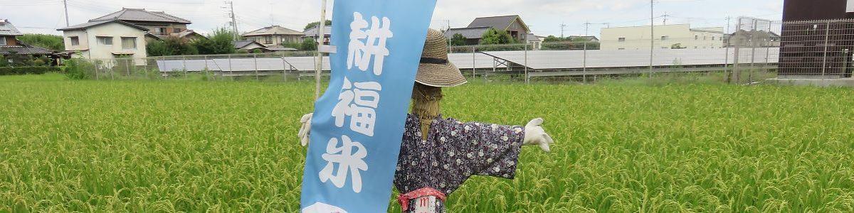 耕福米耕作人のはるみず田んぼ